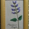 Meadow Sage~メドウセージ