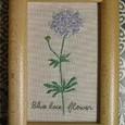 Blue Lace Flower~ブルーレースフラワー