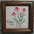 Echinacea~エキナセア