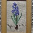 Hyacinthus~ヒヤシンス