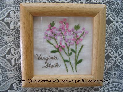 Virginia Stock~バージニアストック