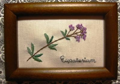 Eupatorium~ユーパトリウム