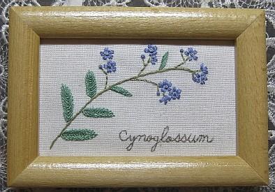 Cynoglossum~シノグロッサム
