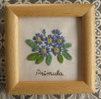 Primula~プリムラ