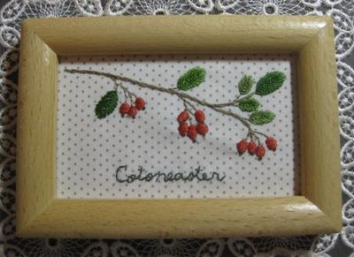 Cotoneaster~コトネアスター